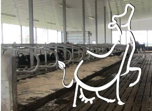 Dairy Cattle Symposium2016