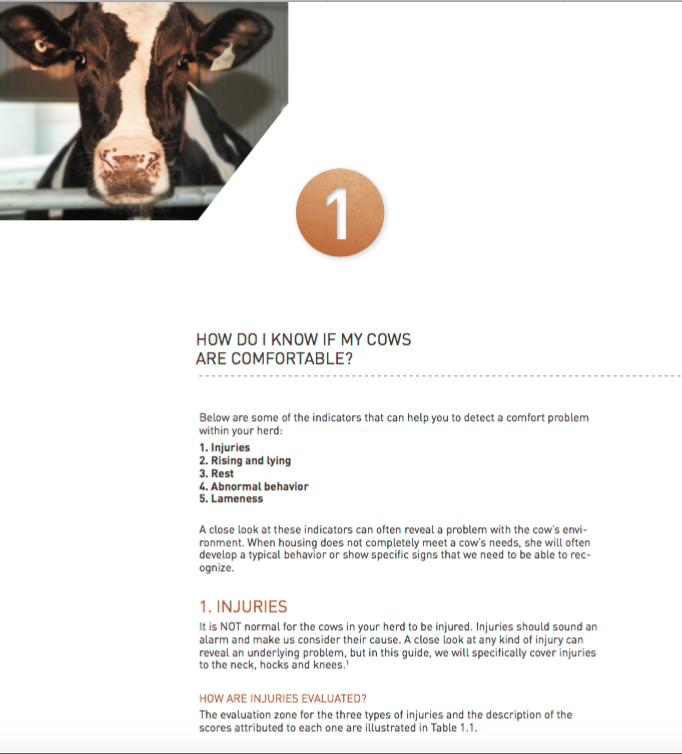 dec22_cowcomfort_e